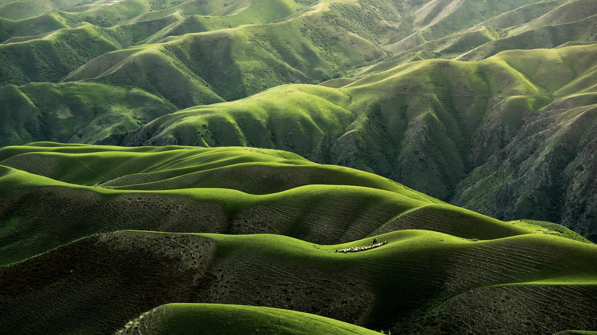 plaine verte nature