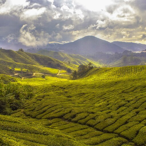Bornéo, merveille de la nature