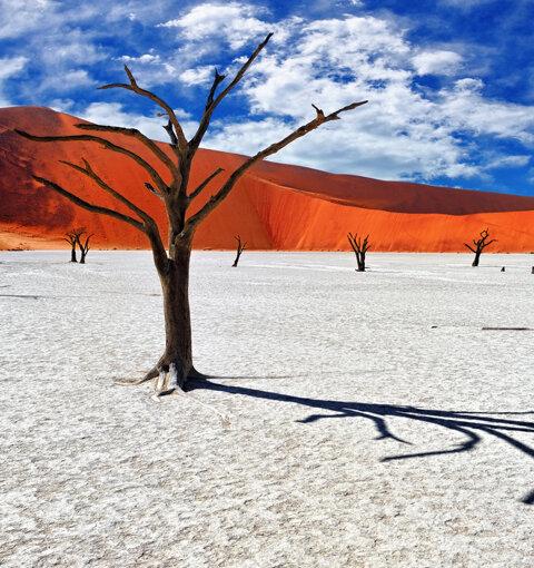 Namibie, terre brûlante et infinie