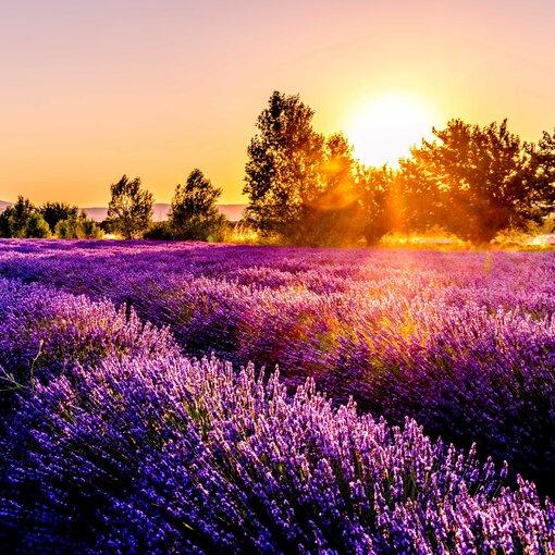 Provence et Côte d'Azur : Charme et Glamour