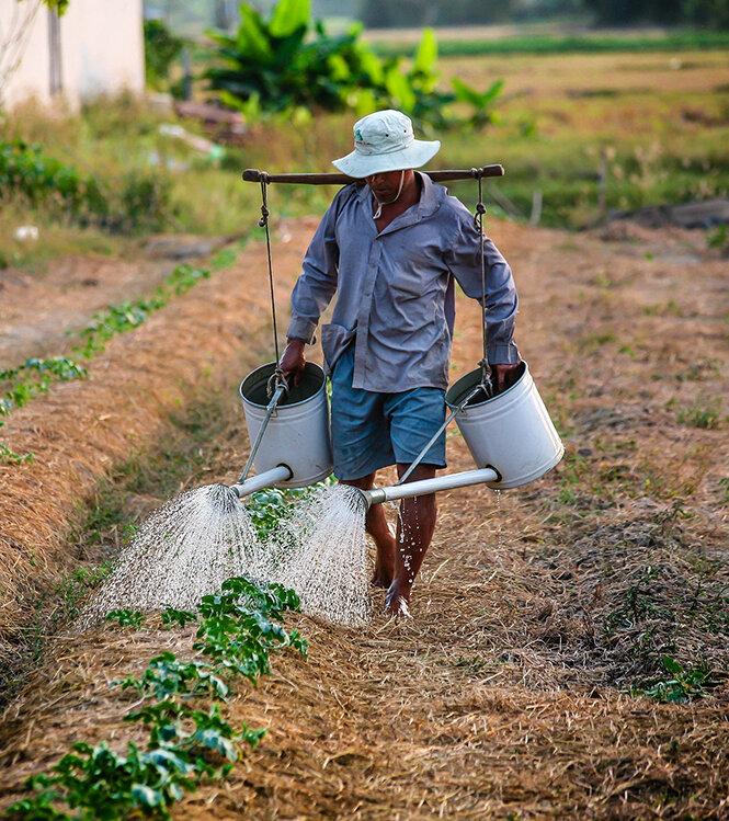 Immersion agricole au village de Go Noi