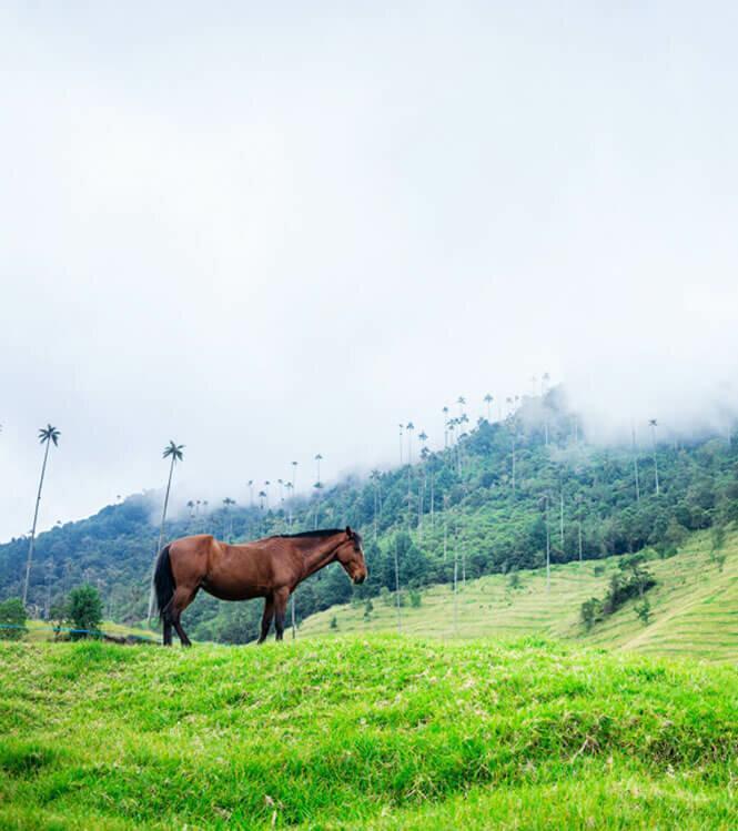 Pique-Nique et Découverte à cheval d'une Finca privée